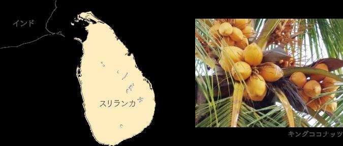 ハーブ美容の国「スリランカ」から届いた天然100%のキングココナッツオイル